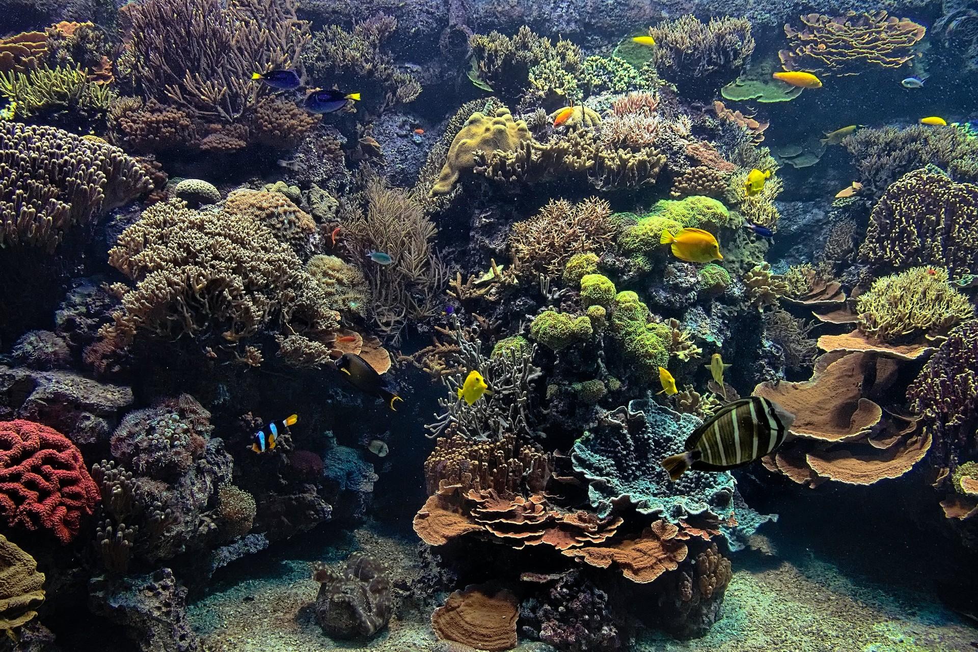 kleines aquarium im tropenaquarium secret hamburg fotos aus hamburg. Black Bedroom Furniture Sets. Home Design Ideas